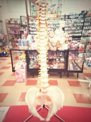 脊髄模型 買取しました!| ハードオフ三河安城店