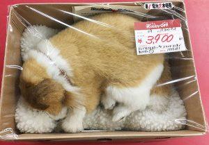 パーフェクトペット 犬 入荷しました。| ハードオフ三河安城店